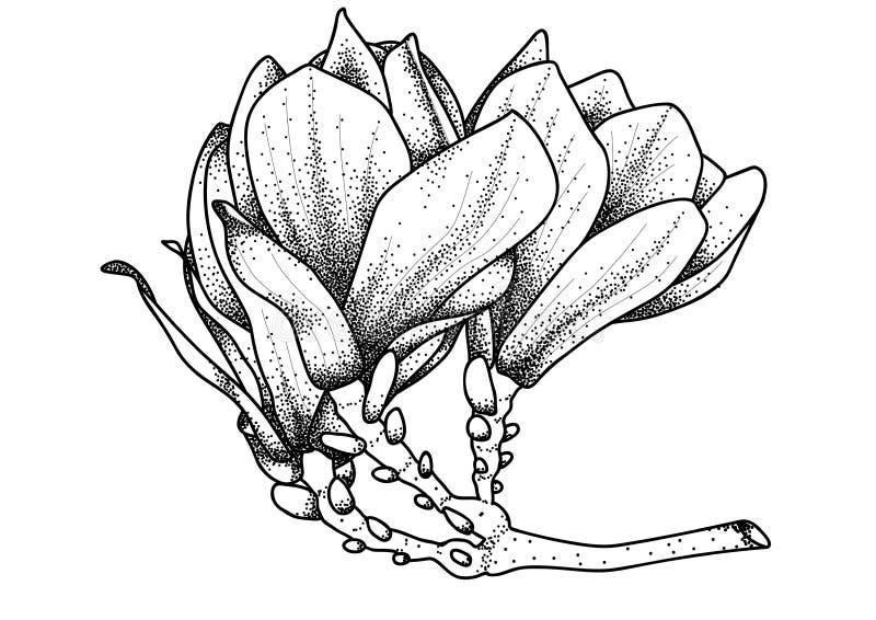 Różowy abloom magnoliowy kwiat ilustracja wektor
