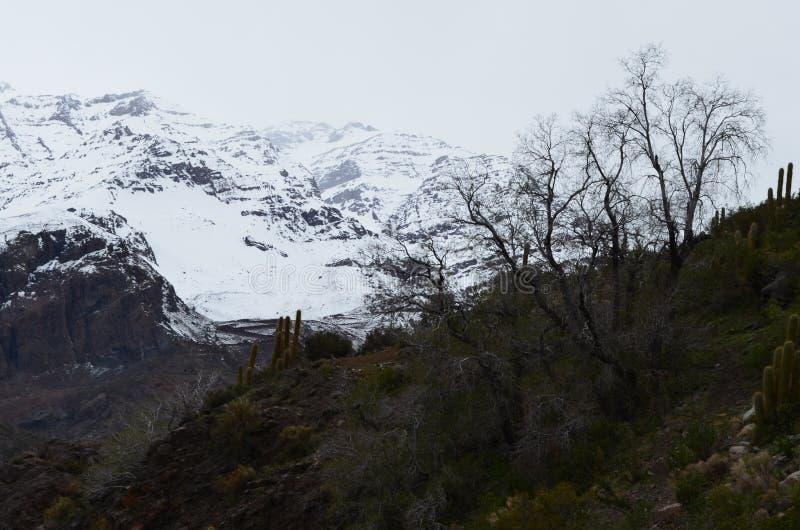 RÃo Blanco Krajowa rezerwa, środkowy Chile, wysoka różnorodności biologicznej dolina w Los Andes zdjęcie stock