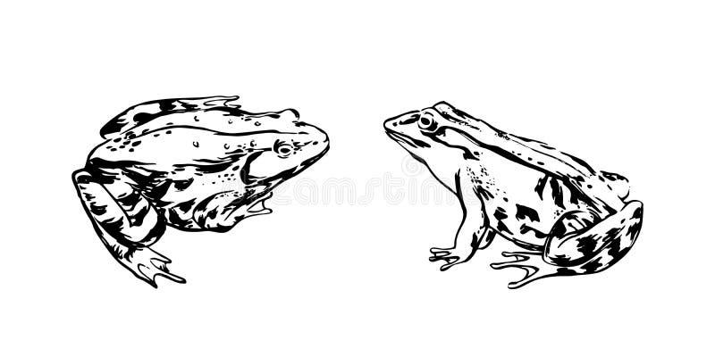 Rãs tiradas mão Ilustração animal isolada preto do esboço do vetor no fundo branco ilustração do vetor