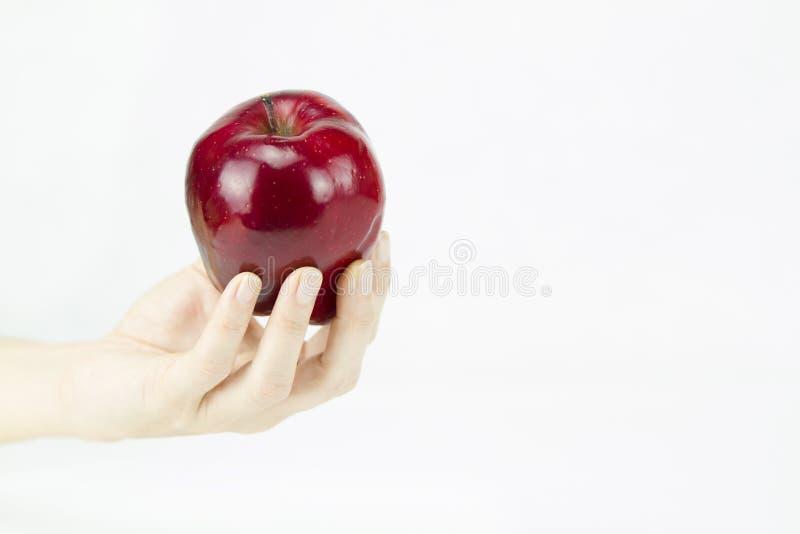 Ręka młoda kobieta trzyma czerwonego jabłka lubi jeden oferuje czarownicą Śnieżny biel na białym tle fotografia royalty free