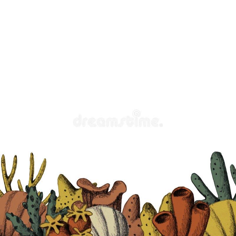 Ręka rysująca kolorowa roślina wodna i korale Skandynawski morze royalty ilustracja