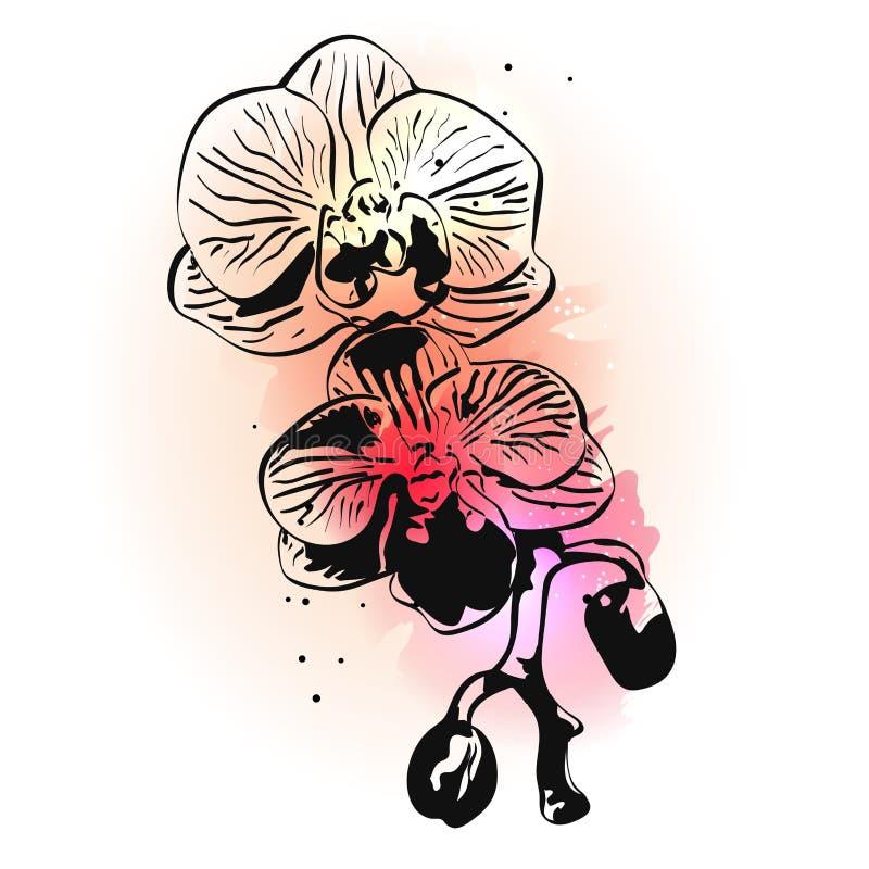 Ręka rysujący atramentu storczykowy kwiat na różowej akwareli bryzga na białym tle ilustracja wektor