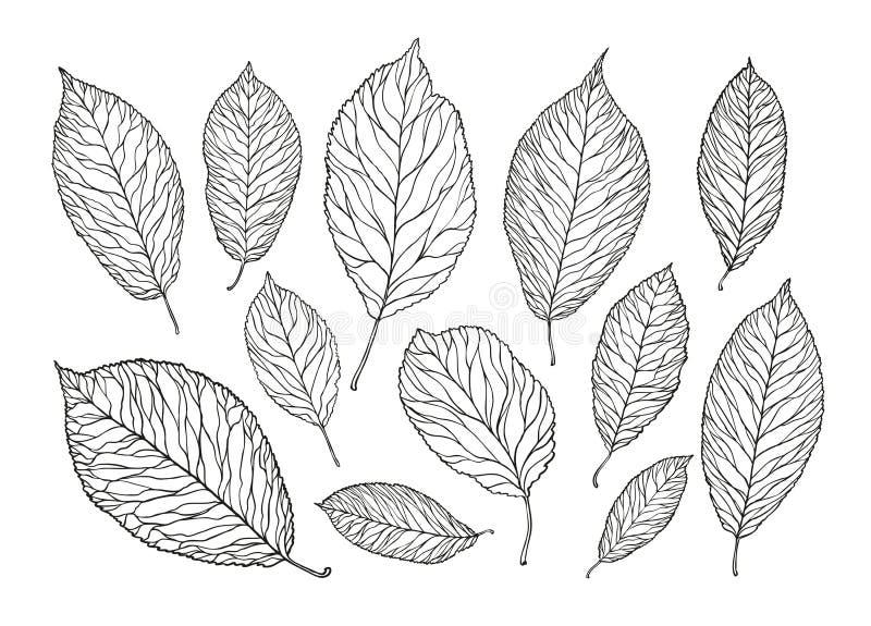 Ręka rysujący drzewo liście Natura, ulistnienia nakreślenie Dekoracyjna wektorowa ilustracja royalty ilustracja