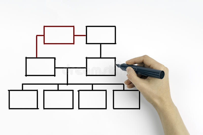 Räcka att dra ett organisationsdiagram på ett vitt bräde royaltyfri bild