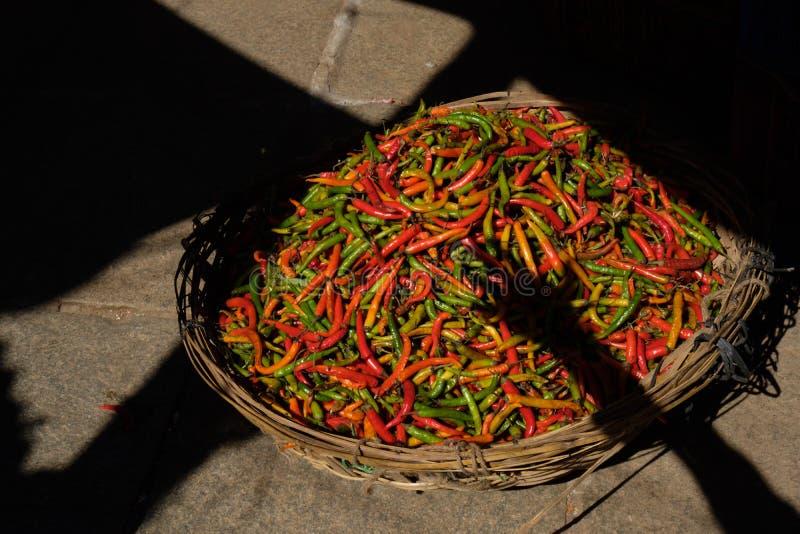 Räcka att nå till ny röd, orange grön chilipeppar i indisk marknad royaltyfri fotografi