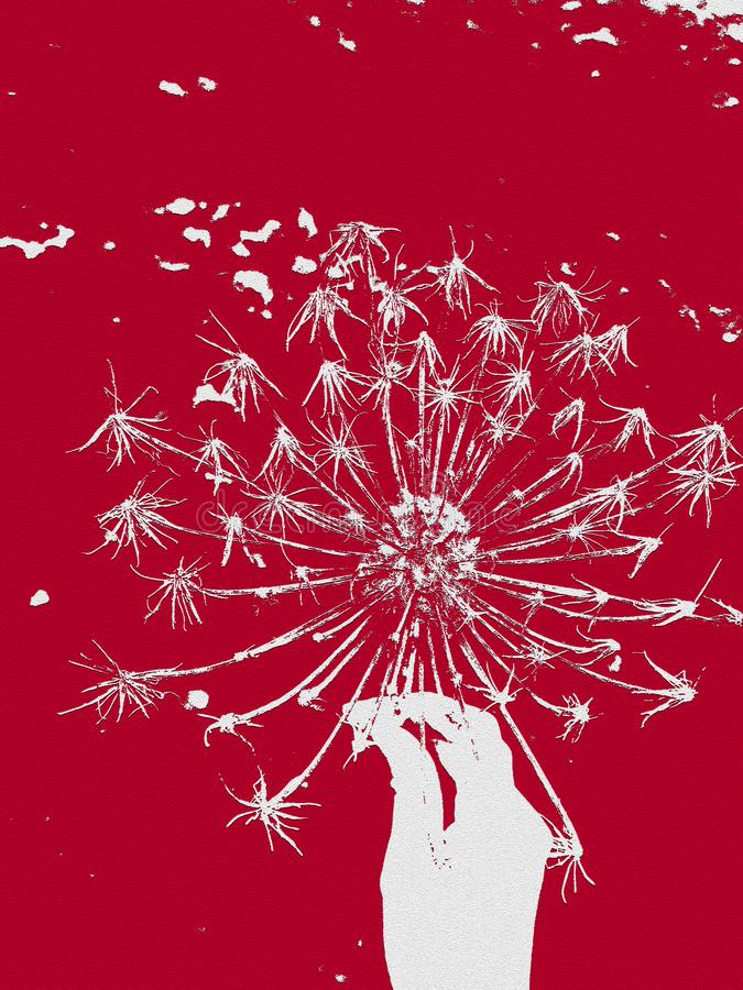 Räcka att rymma en vissen maskros i röd bakgrund royaltyfri fotografi