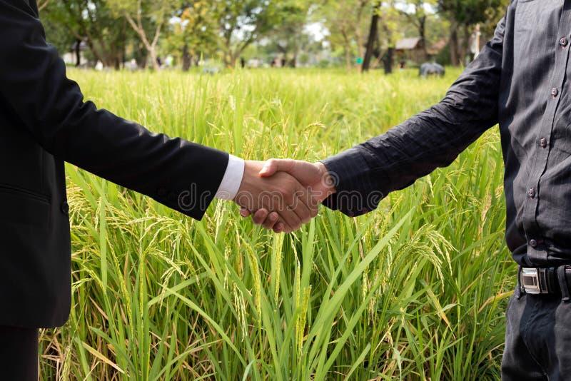 Räcka att skaka överenskommelse av affärsmannen och jordbruk på ris royaltyfria foton