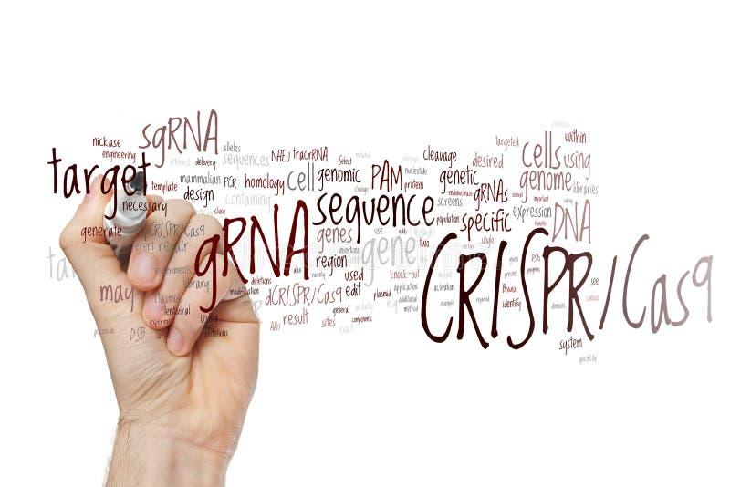 Räcka att skriva systemet CRISPR/Cas9 för att redigera, reglering och att uppsätta som mål av genom royaltyfri foto
