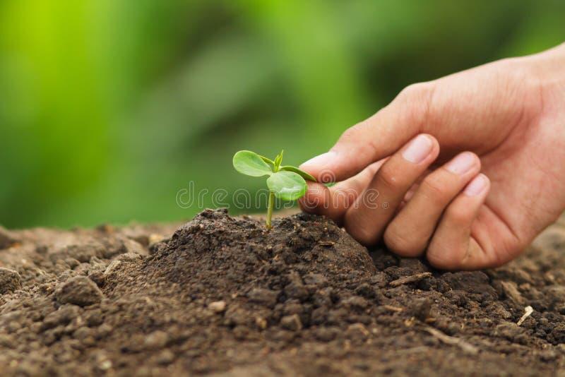 Räcka att trycka på sidor av plantaväxten med omsorg royaltyfria bilder
