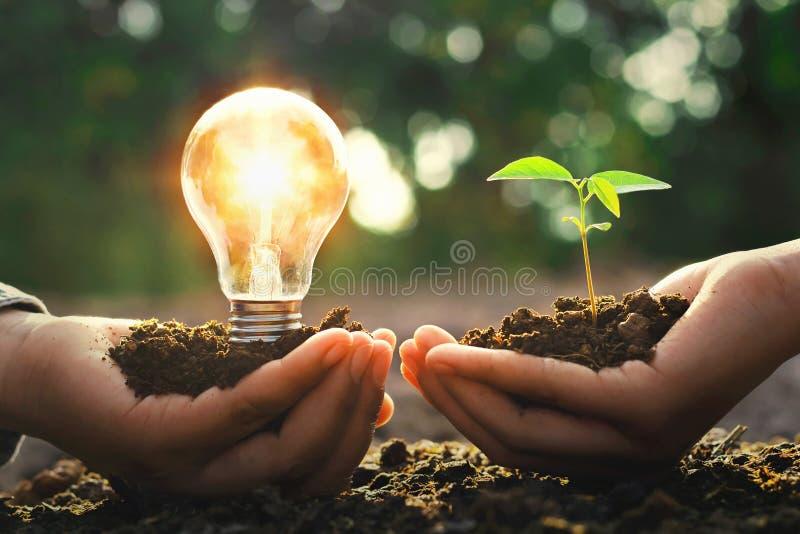 räcka den hållande lightbulben med det litet trädet och solsken ene begrepp royaltyfri fotografi