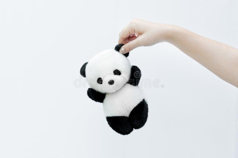 räcka den hållande pandadockan, den svarta kanten av ögon, pandaleksak på vit arkivfoton