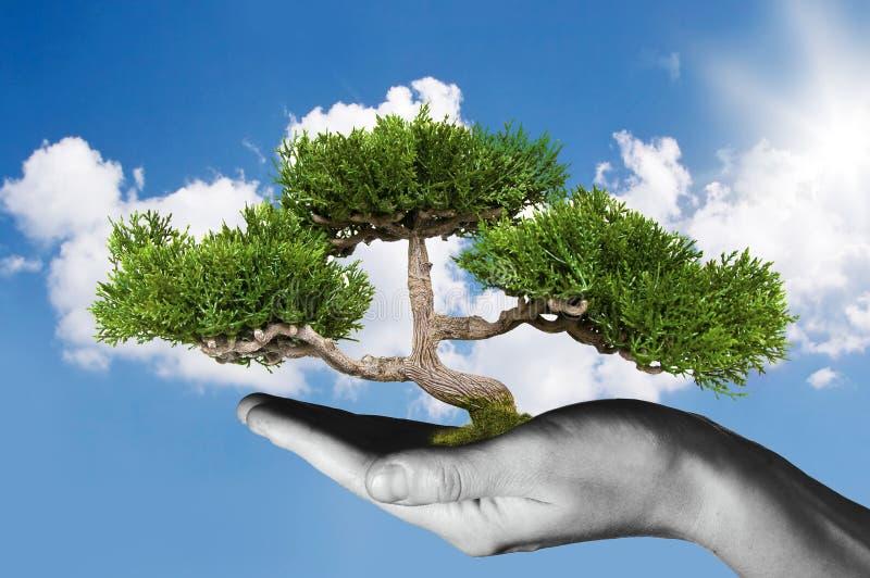 Räcka den hållande treen royaltyfri fotografi