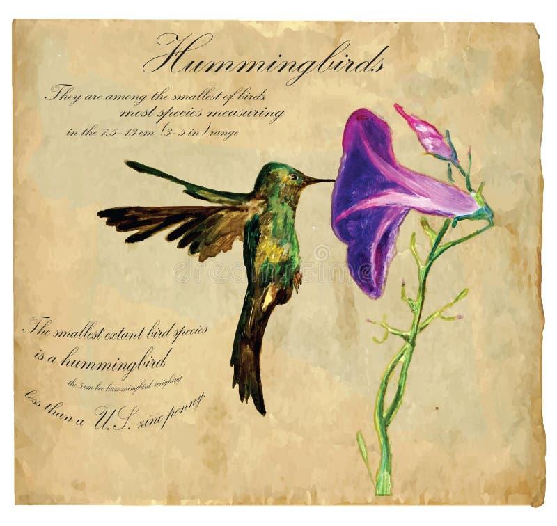 Räcka den målade illustrationen (vektorn), fågel: Kolibri royaltyfri illustrationer