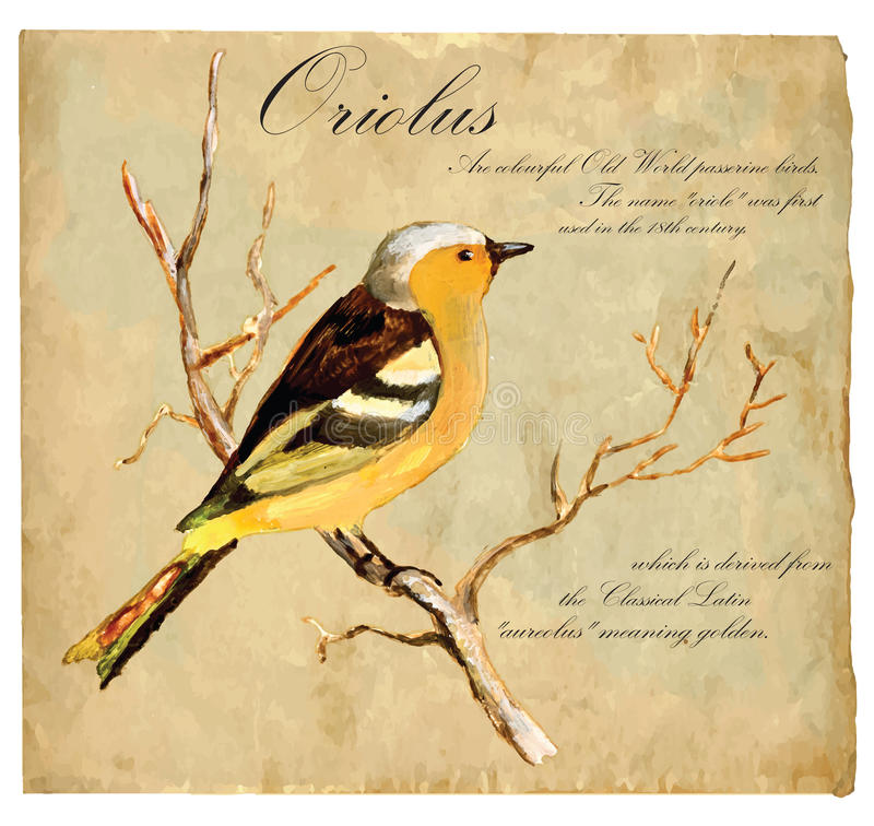 Räcka den målade illustrationen (vektorn), fågel: Oriolus stock illustrationer