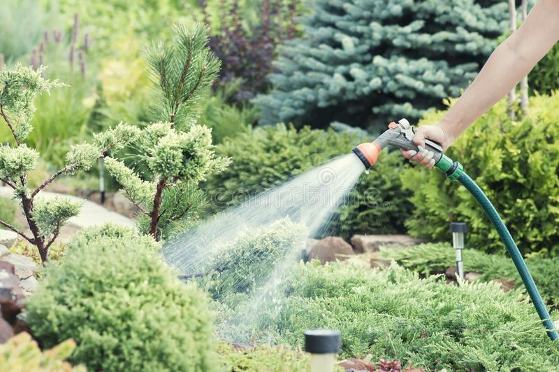 Räcka den trädgårds- slangen med vattensprej som bevattnar blommor, närbilden, vattenfärgstänk, landskapdesignen, alpin glidbana royaltyfri bild