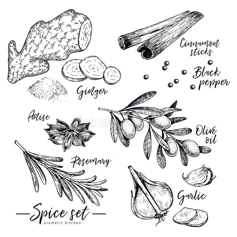 Räcka den utdragna ört-, krydda- och smaktillsatsuppsättningen Vektoringefära-, kanel-, anis-, olivolja-, rosmarin- och vitlöksym vektor illustrationer