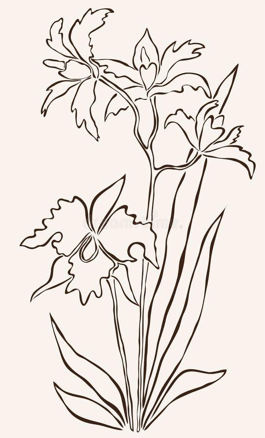 Räcka den utdragna orchiden stock illustrationer