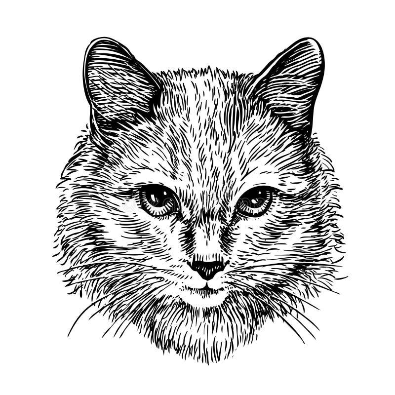 Räcka den utdragna ståenden av den gulliga katten, skissa konstvektorillustration stock illustrationer