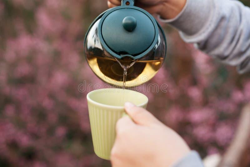 Räcka hällande te till en koppformtekanna royaltyfri fotografi