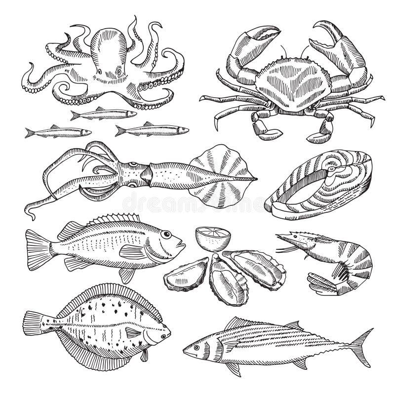 Räcka teckningsvektorillustrationer av havsmat för restaurangmeny royaltyfri illustrationer