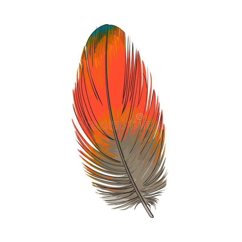 Räcka utdragen smoth den orange tropiska exotiska fågeln, papegojafjäder stock illustrationer