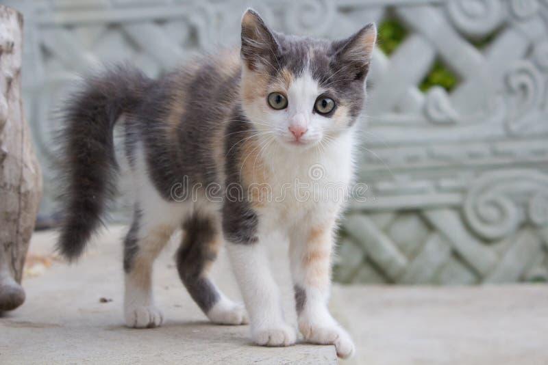 Rädd kattunge arkivbild