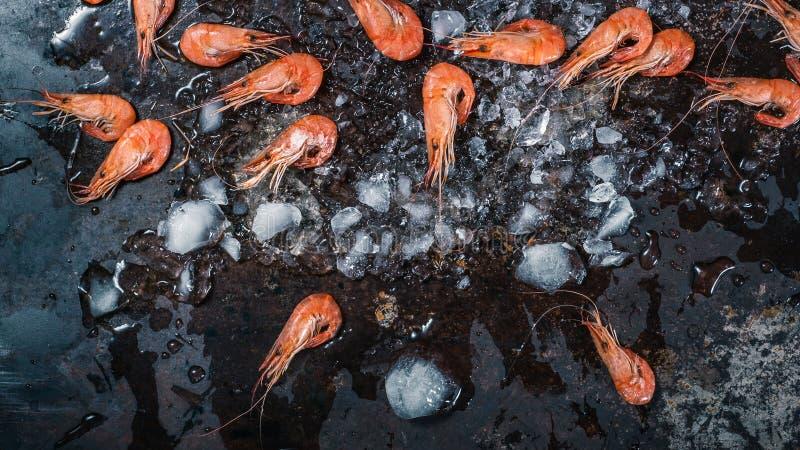 Räkaräka med krossad is på mörk grungebakgrund Top besk?dar royaltyfria bilder