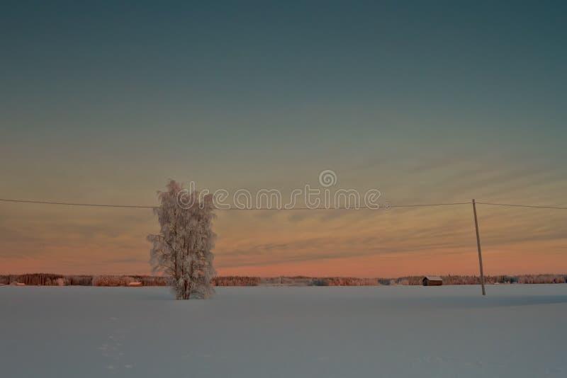 räknad ensam snowtree arkivfoton