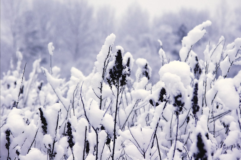 Räknad Snow Arkivfoton