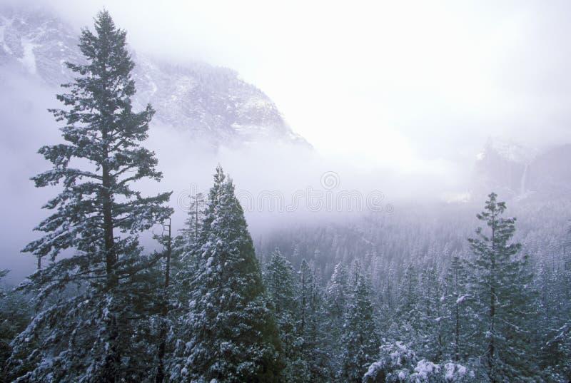 Räknad Snow sörjer Trees arkivbilder