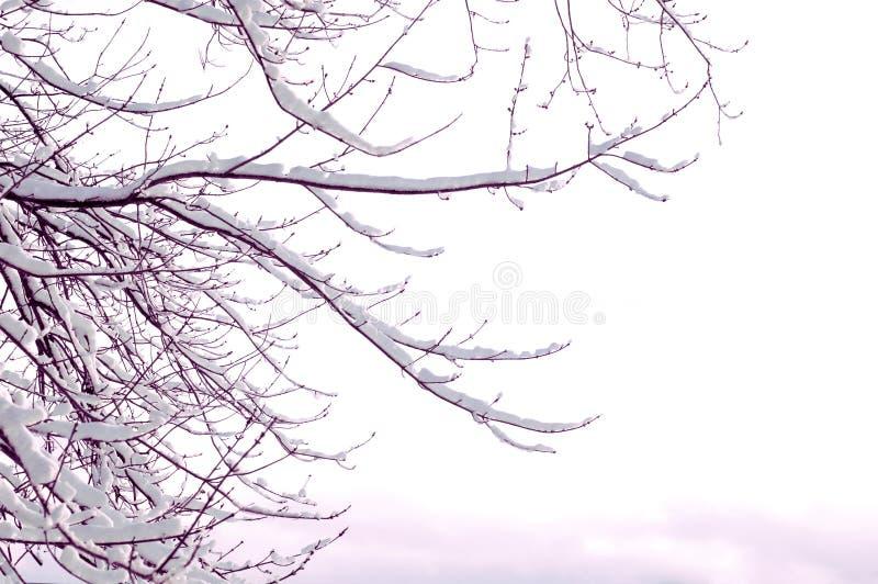 Download Räknad snowtree arkivfoto. Bild av kallt, vinter, avlövat - 519172