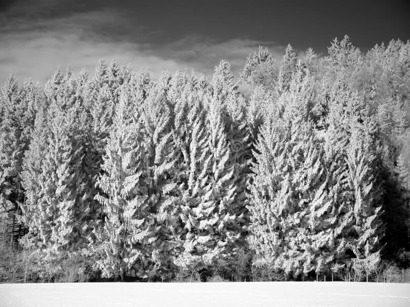 räknad vinter för skogplatssnow royaltyfri fotografi