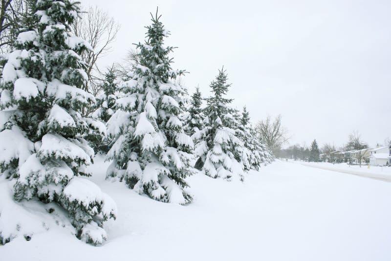 räknad vinter för trees för hussnowgata fotografering för bildbyråer