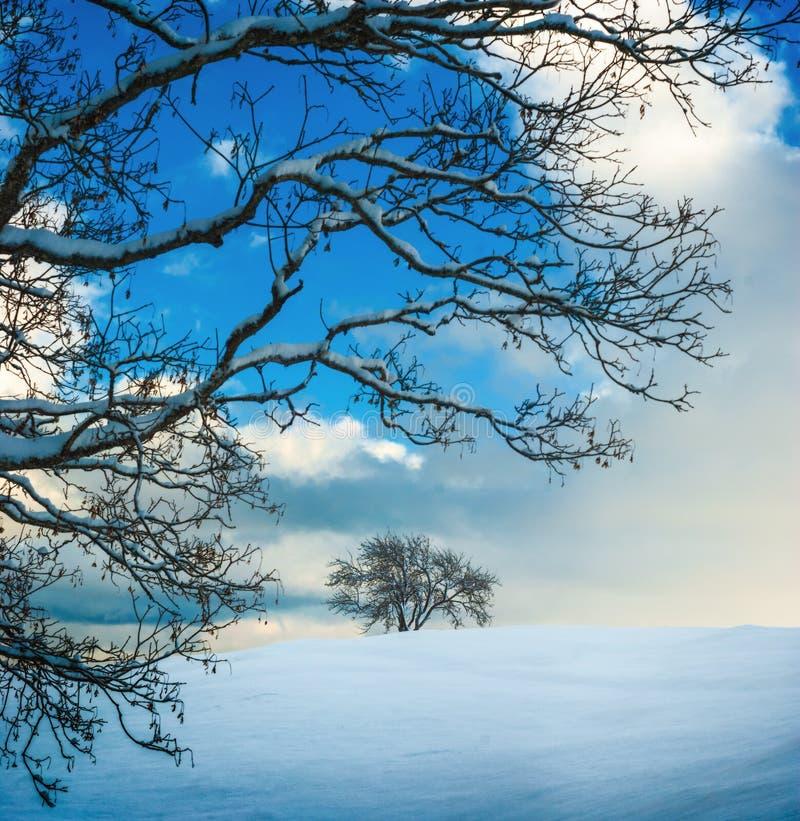 räknade nya snowtrees arkivbilder