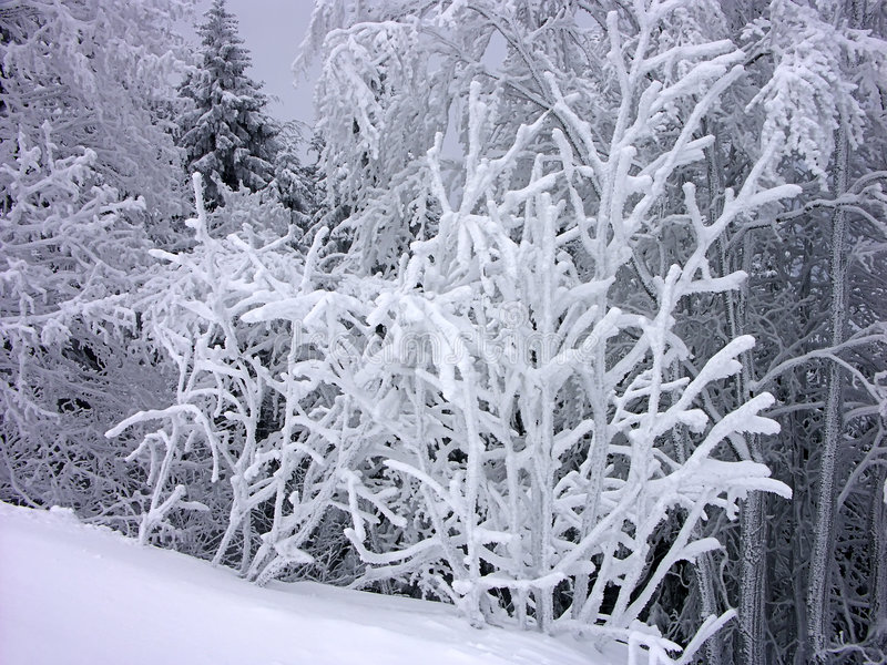 Download Räknade snowtrees arkivfoto. Bild av frysa, frysning, skog - 518228
