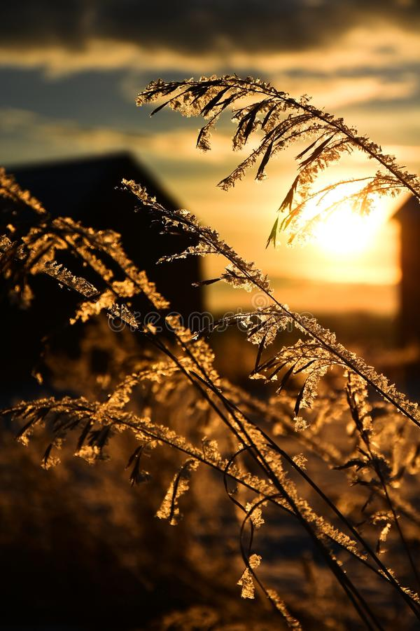räknat frostgräs royaltyfria bilder