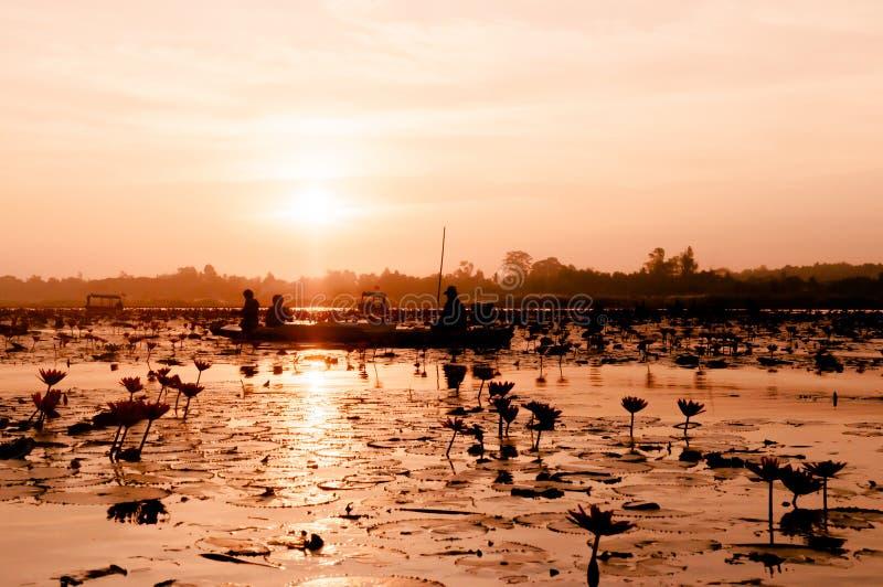 Räknat lotus vatten blåser fullt ut mot morgonljus - ren och vacker röd lotus-sjö i Nong Harn, Udonthani - Thailand royaltyfri foto