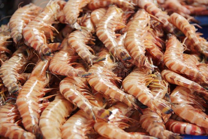 Räkor på den Dubai fiskmarknaden royaltyfri foto