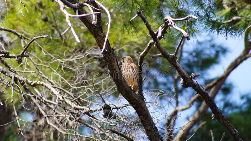 Räuberischer Vogel lizenzfreie stockfotos