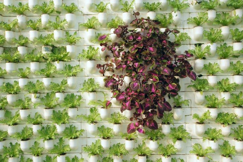 Räumliches Pflanzen lizenzfreies stockbild