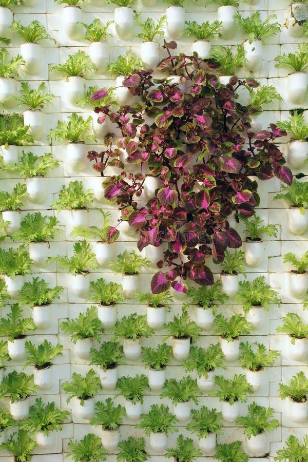 Räumliches Pflanzen stockbild