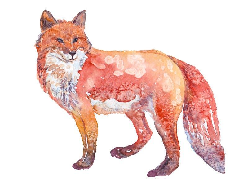 Räven vattenfärg, skissar, målar, djur, illustration arkivfoton