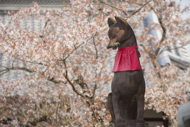 Rävstaty på den Fushimi Inari relikskrin med det sakura trädet arkivbild