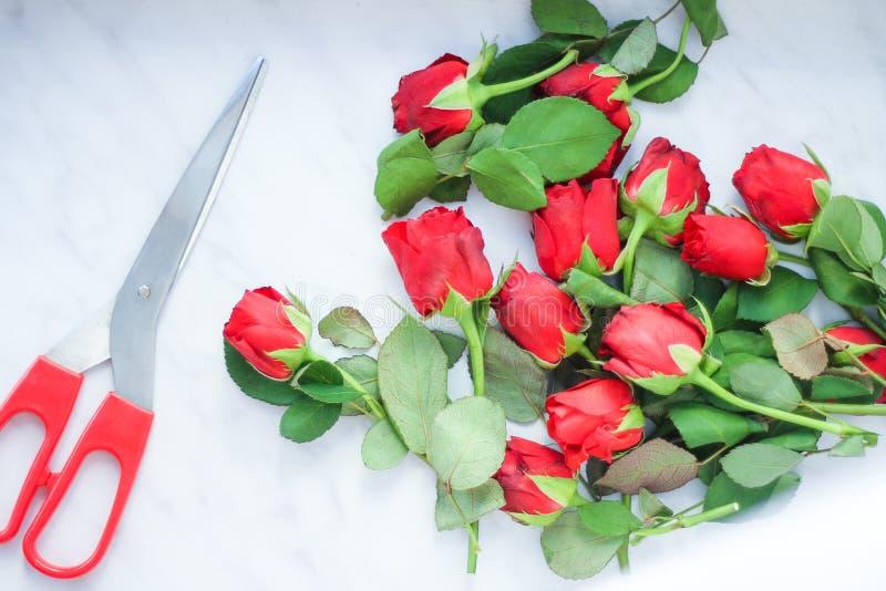 Rżnięci czerwieni róży pączki i nożyce z czerwonymi rękojeściami Odgórny widok, Lekki tło obraz royalty free