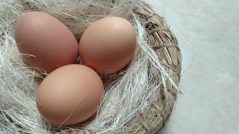 rå ägg royaltyfri fotografi