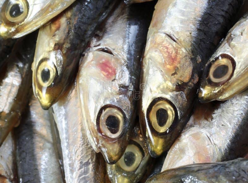 Rå ansjovisar fiskar precis till salu i fiskmarknad arkivbild