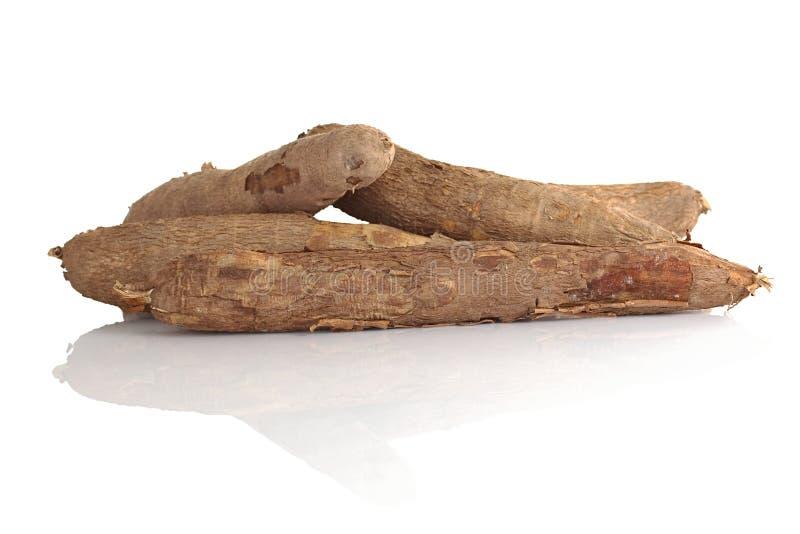 rå cassava arkivfoton