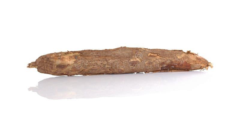 rå cassava royaltyfri bild