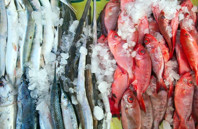 Rå fisk på marknadsräknare arkivbilder