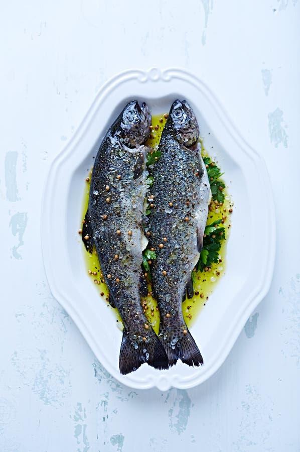 Rå forell i marinad; ordna till för att lagas mat royaltyfri fotografi